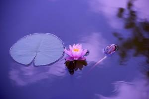 thai massage relaxes
